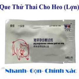 QUE THỬ THAI CHO HEO
