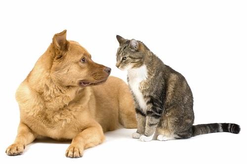 DỤNG CỤ Nuôi Chó Mèo